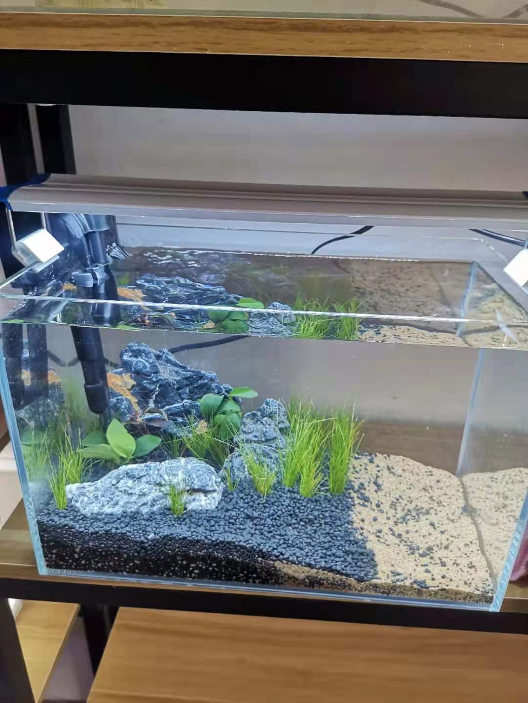 青岛鱼缸造景 水草缸造景