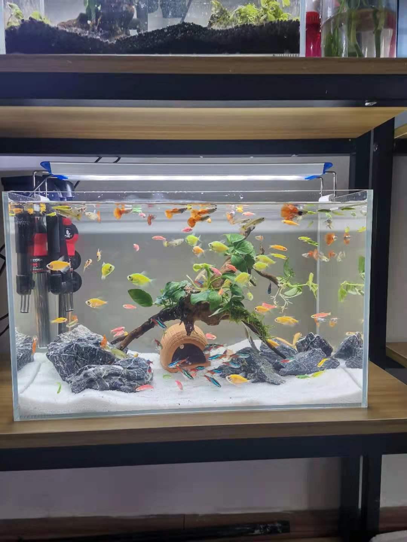 青岛崂山区鱼缸造景 鱼缸清洗 水草缸造景